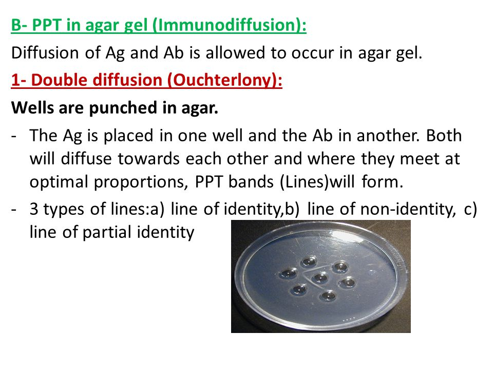 B- PPT in agar gel (Immunodiffusion): Diffusion of Ag and Ab is allowed to occur in agar gel. 1- Double diffusion (Ouchterlony): Wells are punched in