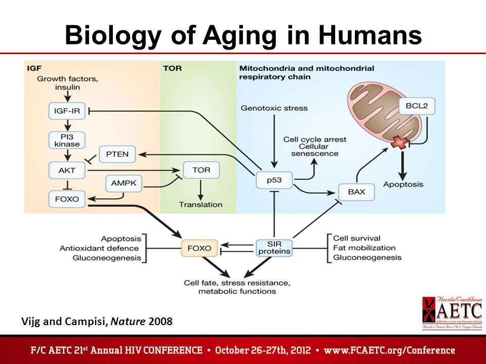 Biology of Aging in Humans Vijg and Campisi, Nature 2008
