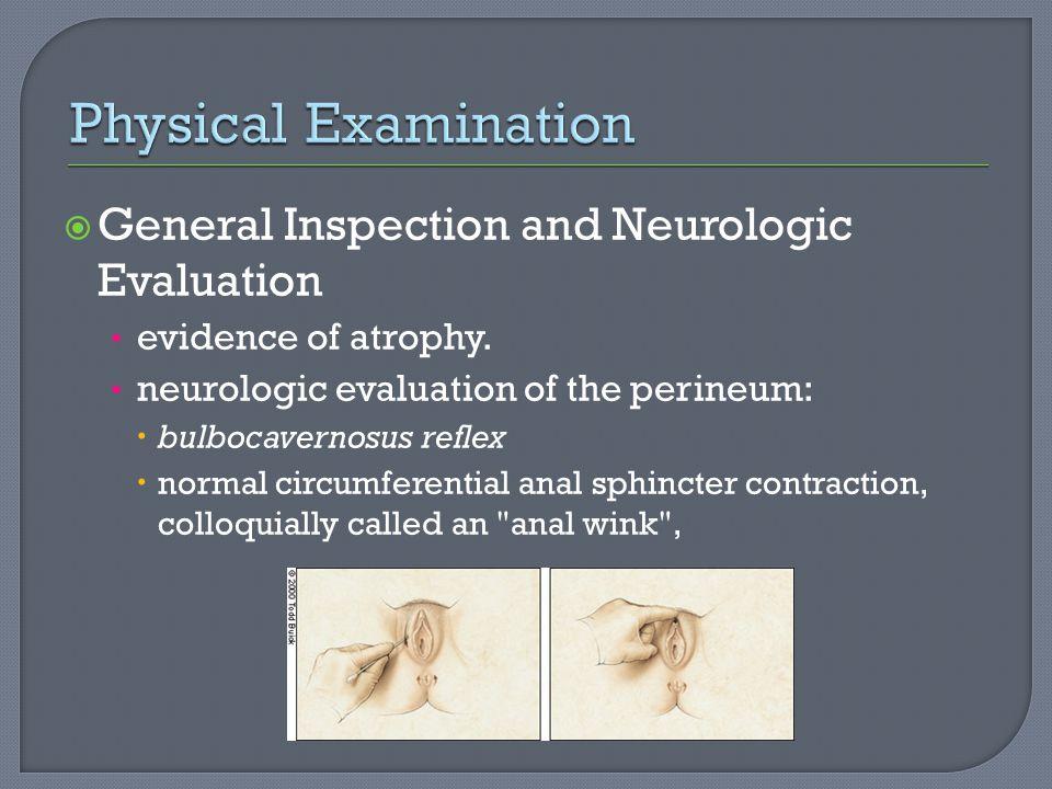  General Inspection and Neurologic Evaluation evidence of atrophy. neurologic evaluation of the perineum:  bulbocavernosus reflex  normal circumfer