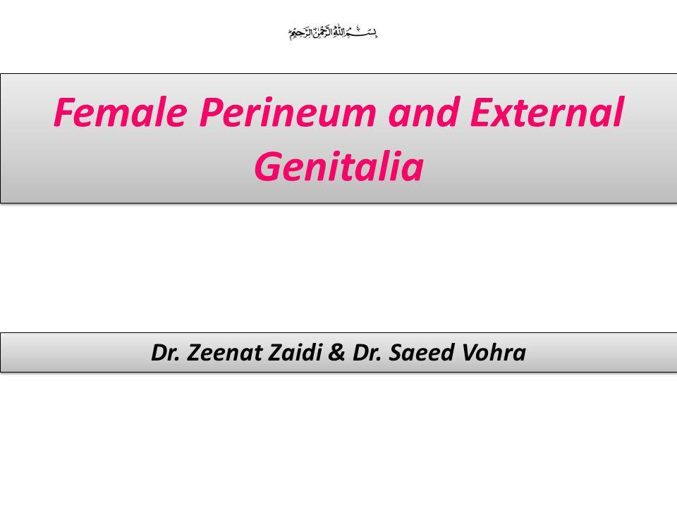 Female Perineum and External Genitalia Dr. Zeenat Zaidi & Dr. Saeed Vohra