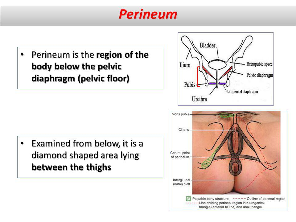 Perineum is the region of the body below the pelvic diaphragm (pelvic floor) Perineum is the region of the body below the pelvic diaphragm (pelvic flo