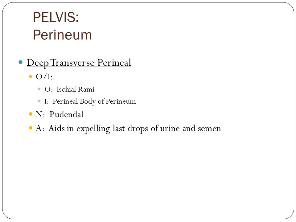 PELVIS: Perineum Deep Transverse Perineal O/I: O: Ischial Rami I: Perineal Body of Perineum N: Pudendal A: Aids in expelling last drops of urine and s