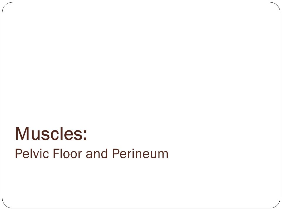 Muscles: Pelvic Floor and Perineum