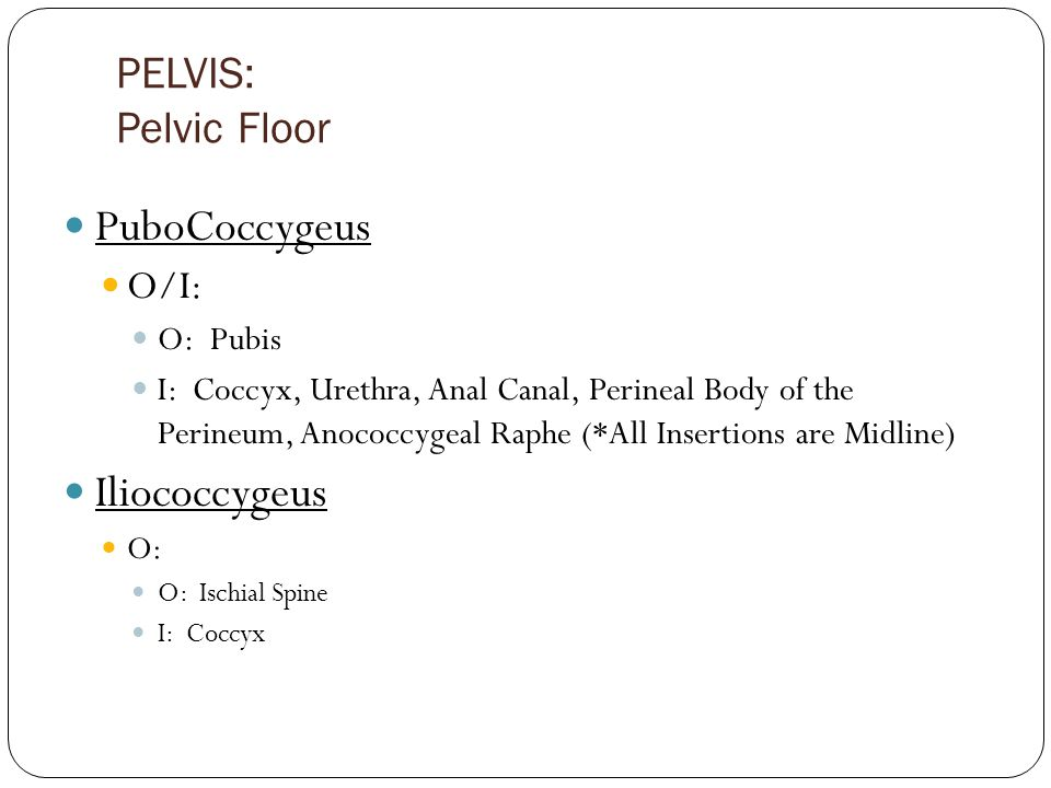 PELVIS: Pelvic Floor PuboCoccygeus O/I: O: Pubis I: Coccyx, Urethra, Anal Canal, Perineal Body of the Perineum, Anococcygeal Raphe (*All Insertions are Midline) Iliococcygeus O: O: Ischial Spine I: Coccyx