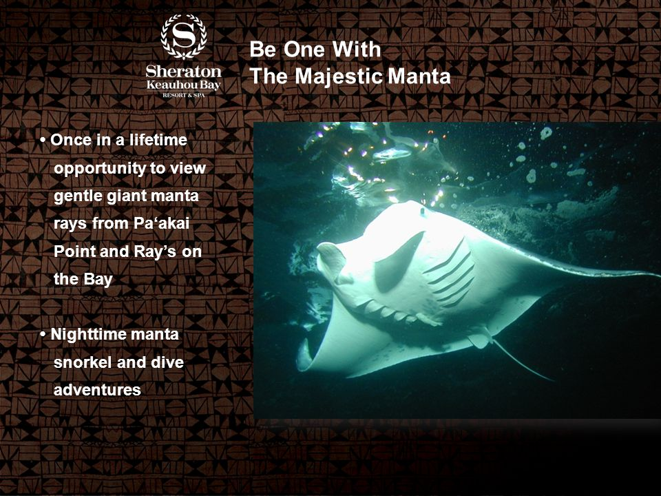 Be One With The Majestic Manta Once in a lifetime opportunity to view gentle giant manta rays from Pa'akai Point and Ray's on the Bay Nighttime manta snorkel and dive adventures