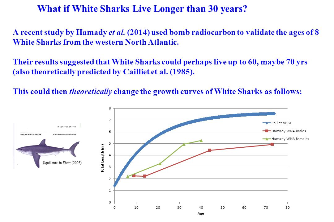 What if White Sharks Live Longer than 30 years? A recent study by Hamady et al. (2014) used bomb radiocarbon to validate the ages of 8 White Sharks fr