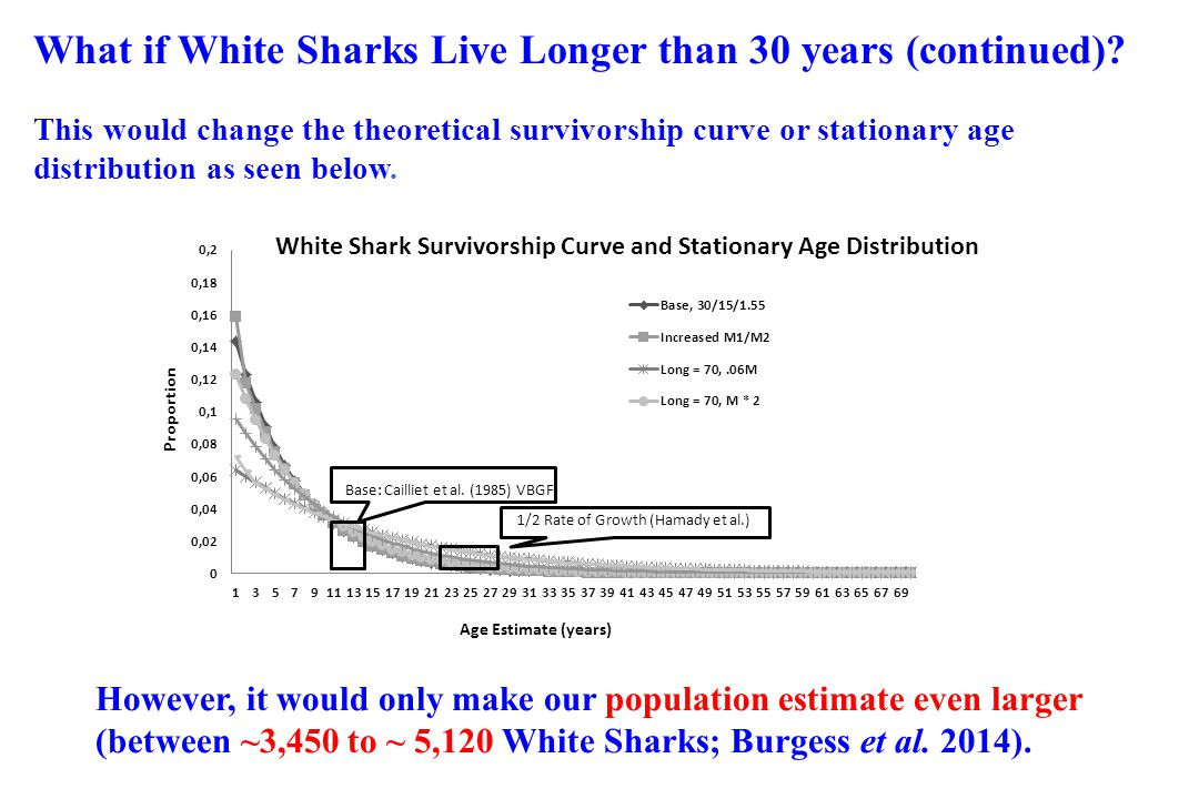 What if White Sharks Live Longer than 30 years (continued)? This would change the theoretical survivorship curve or stationary age distribution as see