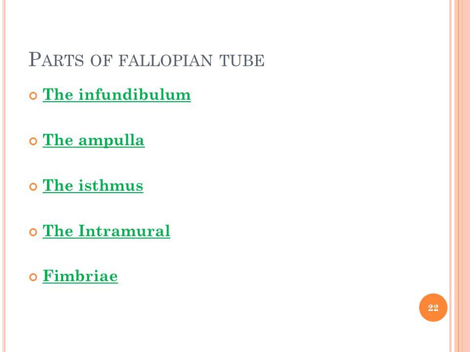 P ARTS OF FALLOPIAN TUBE The infundibulum The ampulla The isthmus The Intramural Fimbriae 22