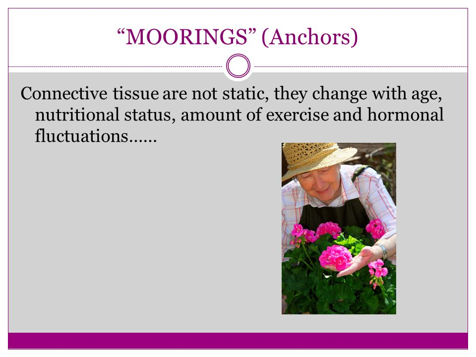 """MOORINGS"" (Anchors) Connective tissue are not static, they change with age, nutritional status, amount of exercise and hormonal fluctuations……"
