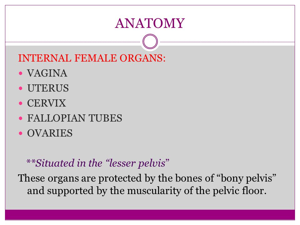 "ANATOMY INTERNAL FEMALE ORGANS: VAGINA UTERUS CERVIX FALLOPIAN TUBES OVARIES **Situated in the ""lesser pelvis"" These organs are protected by the bones"