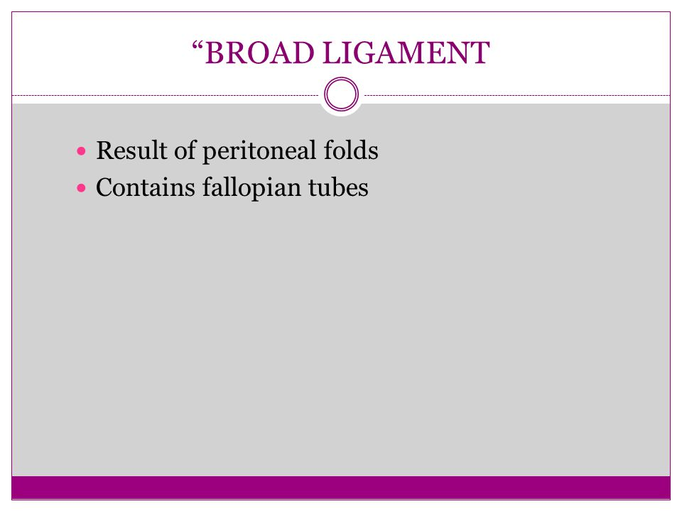 """BROAD LIGAMENT Result of peritoneal folds Contains fallopian tubes"