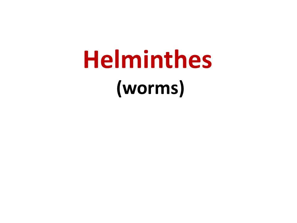 Helminthes sub kingdom metazoa Phylum Nemathelminthes (round worms) class Nematodae (intestinal round worm) class Filariea (tissue round worm) Phylum Platyhelminthes (flat-worms) class Cestodea (tape worm) class Trematodea (Flukes)