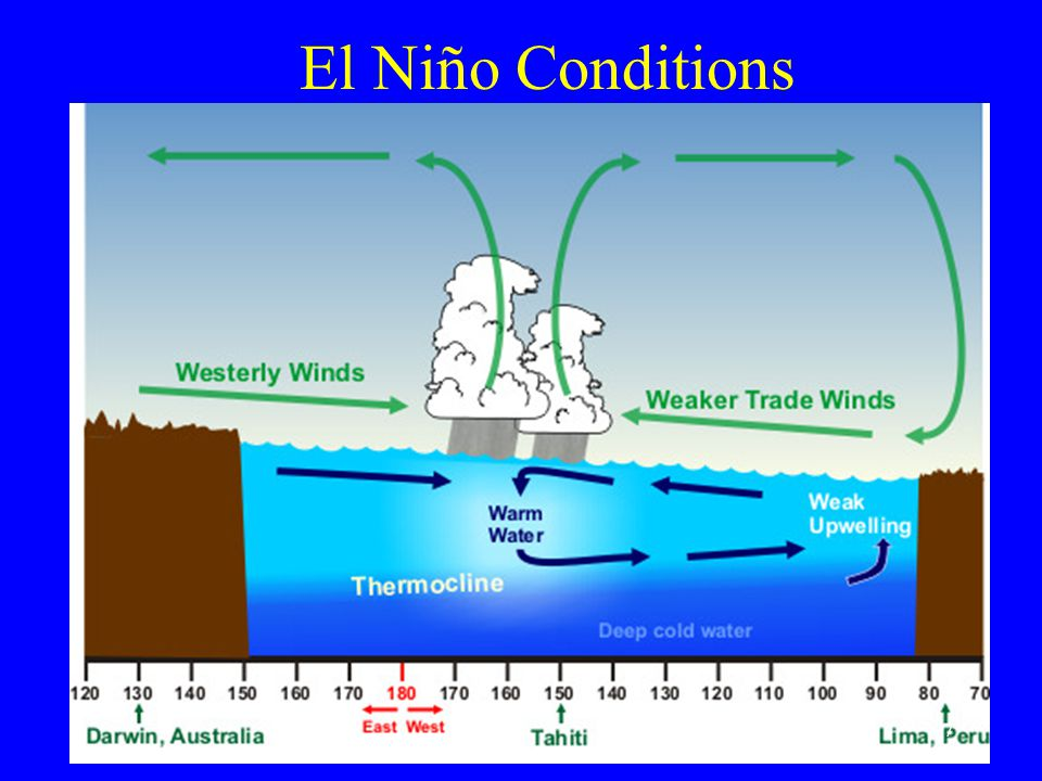 El Ni  o and Productivity During normal conditions, major upwelling brings nutrients and carbon dioxide into the photic zone Creates conditions of very high productivity (plants) and fish that feed on plants and other small fish El Ni  o shuts down the upwelling and decreases productivity 8