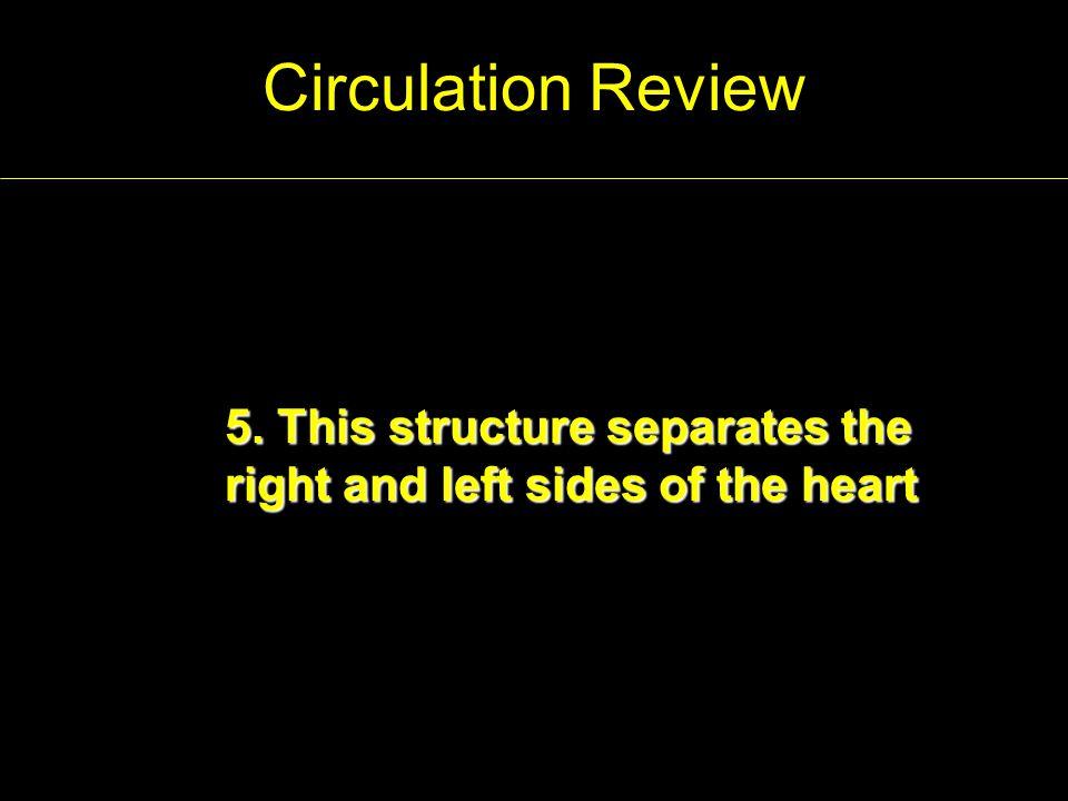 Answer Key 1.Ventricles 2.Vena cava 3. D 4. B-Aorta 5.