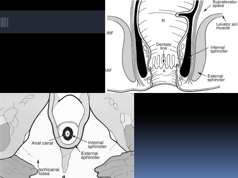  Puborectal muscle has its origin on both sides of the symphysis pubis, forming a sling around the anorectum