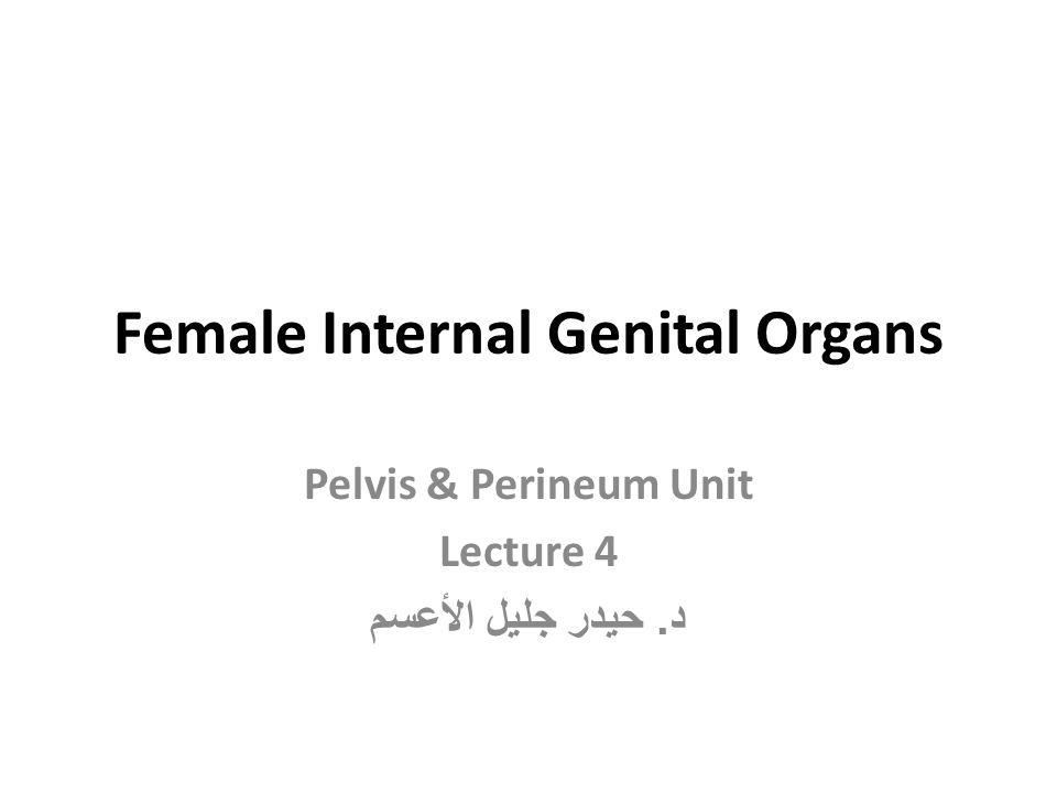 Female Internal Genital Organs Pelvis & Perineum Unit Lecture 4 د. حيدر جليل الأعسم