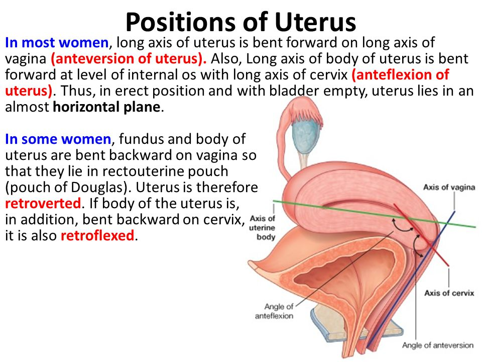 Positions of Uterus In most women, long axis of uterus is bent forward on long axis of vagina (anteversion of uterus). Also, Long axis of body of uter