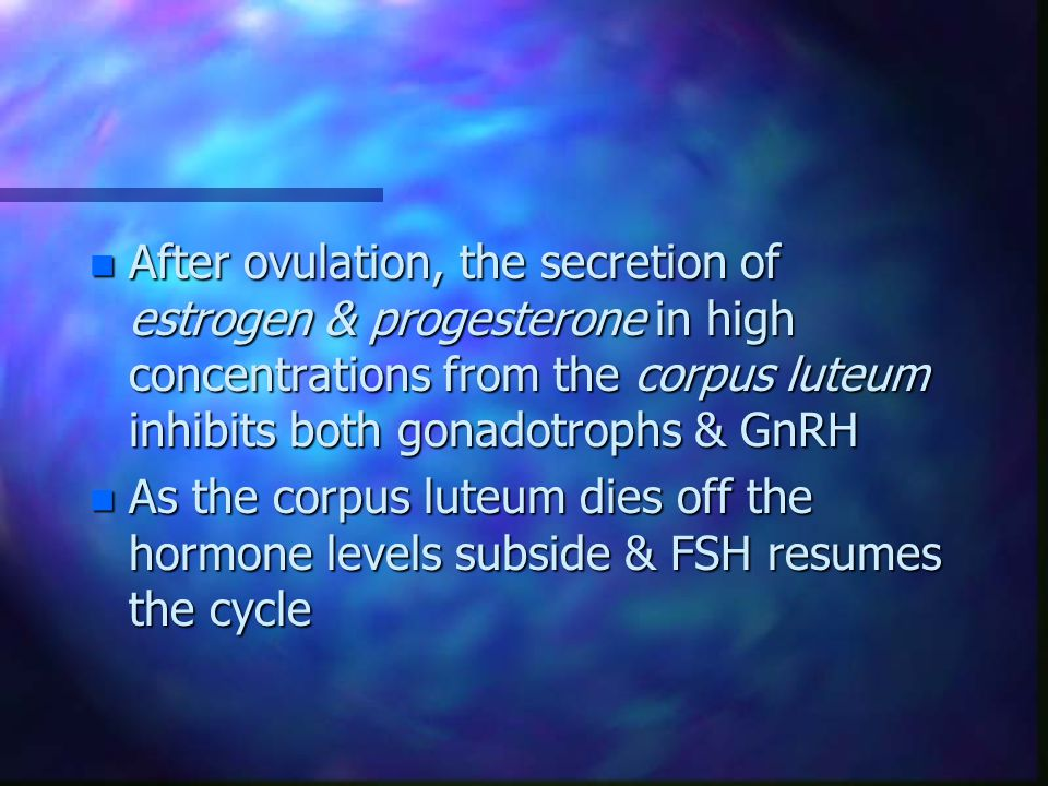 n After ovulation, the secretion of estrogen & progesterone in high concentrations from the corpus luteum inhibits both gonadotrophs & GnRH n As the c