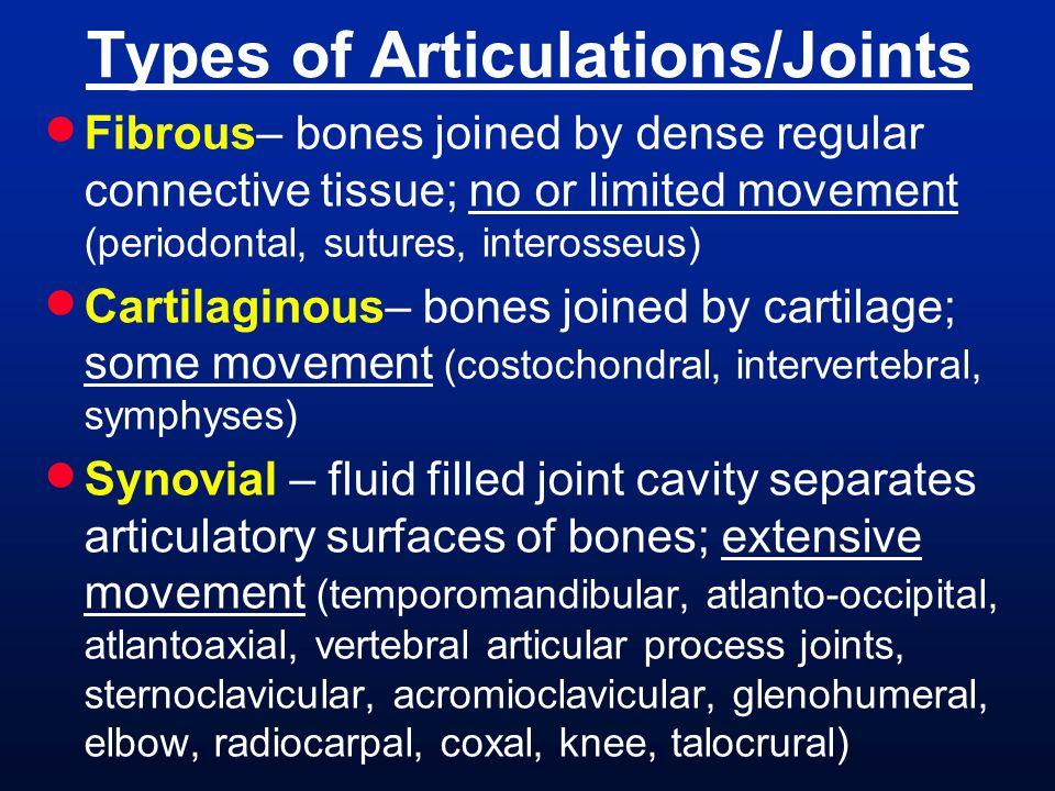 Mandibular Arch Muscles