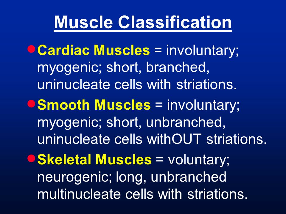 Muscle Classification  Cardiac Muscles = involuntary; myogenic; short, branched, uninucleate cells with striations.  Smooth Muscles = involuntary; m