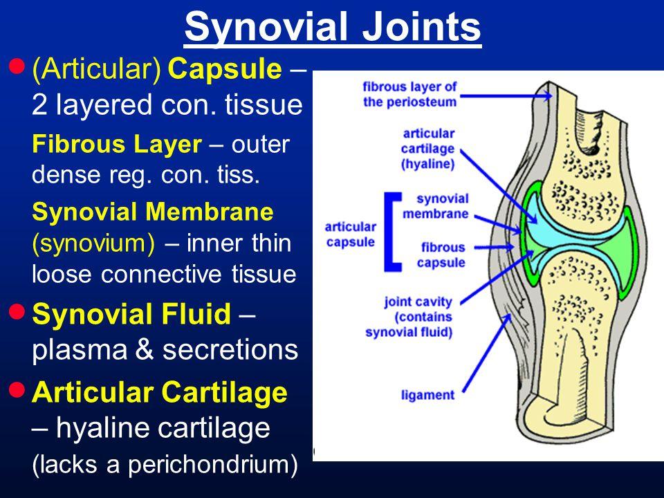  Articular Discs – discs of fibrocartilage between the articular cartilages [ Menisci (sing.