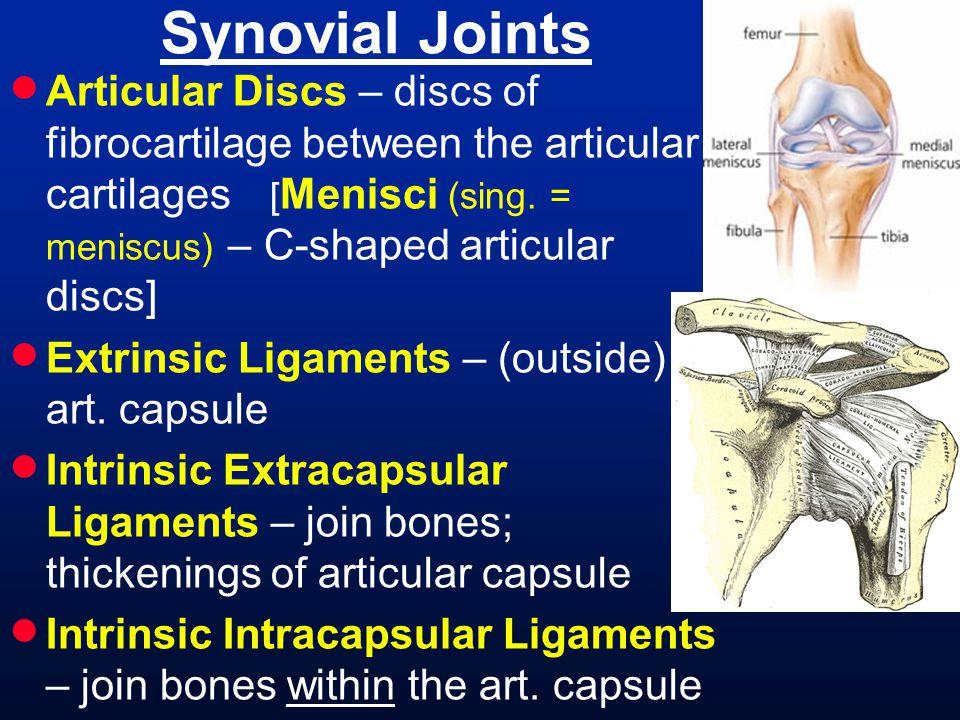 Thoracic (Back) Musculature trapezius latissimus dorsi