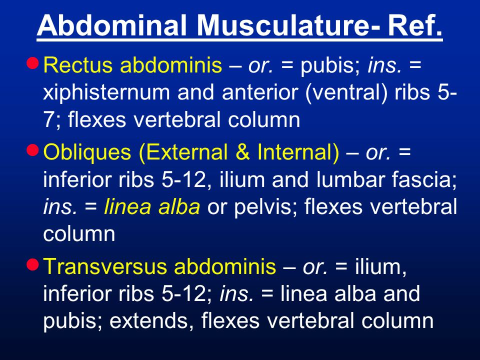  Rectus abdominis – or. = pubis; ins. = xiphisternum and anterior (ventral) ribs 5- 7; flexes vertebral column  Obliques (External & Internal) – or.