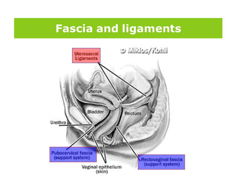 版权所 有 Fascia and ligaments