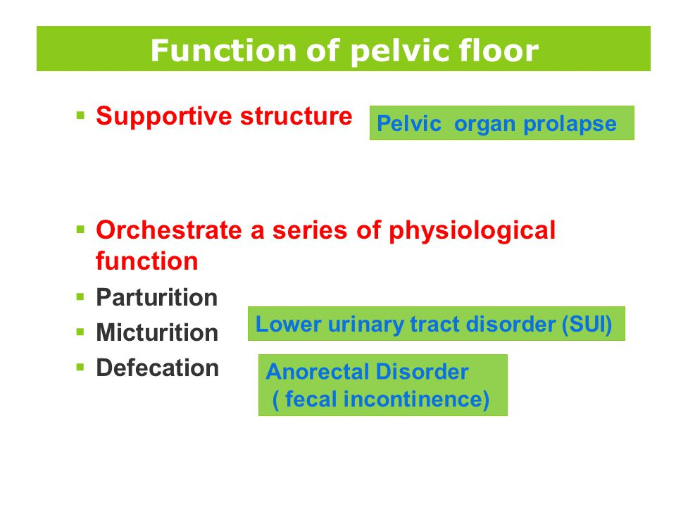 Function of pelvic floor  Supportive structure  Orchestrate a series of physiological function  Parturition  Micturition  Defecation Pelvic organ