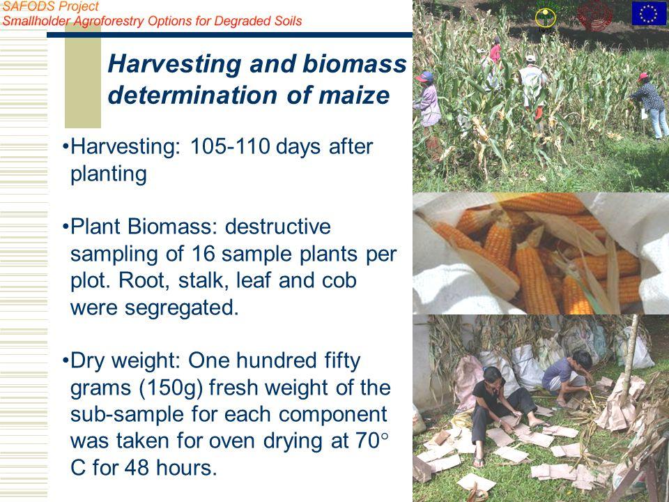 Harvesting: 105-110 days after planting Plant Biomass: destructive sampling of 16 sample plants per plot.
