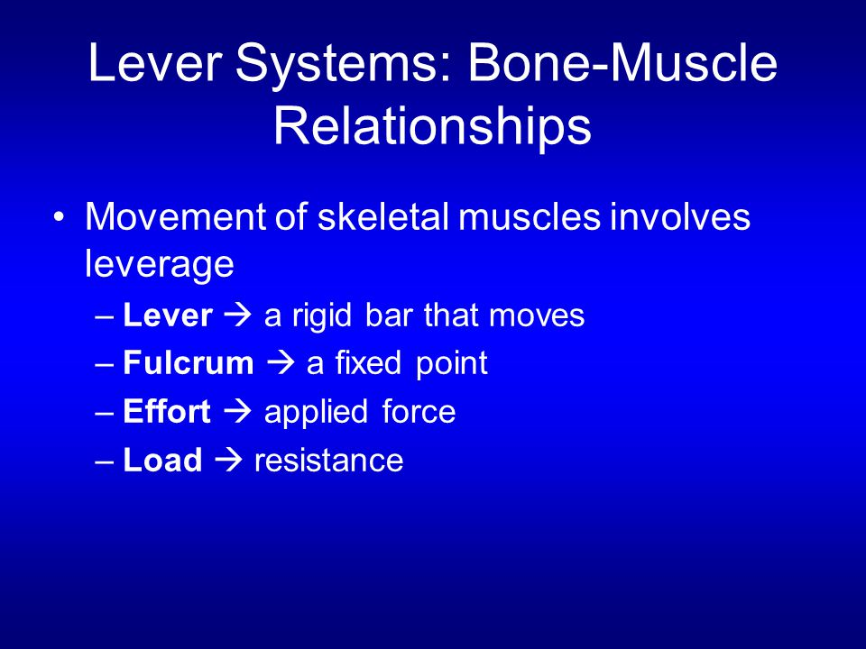 Lever Systems: Bone-Muscle Relationships Movement of skeletal muscles involves leverage –Lever  a rigid bar that moves –Fulcrum  a fixed point –Effo