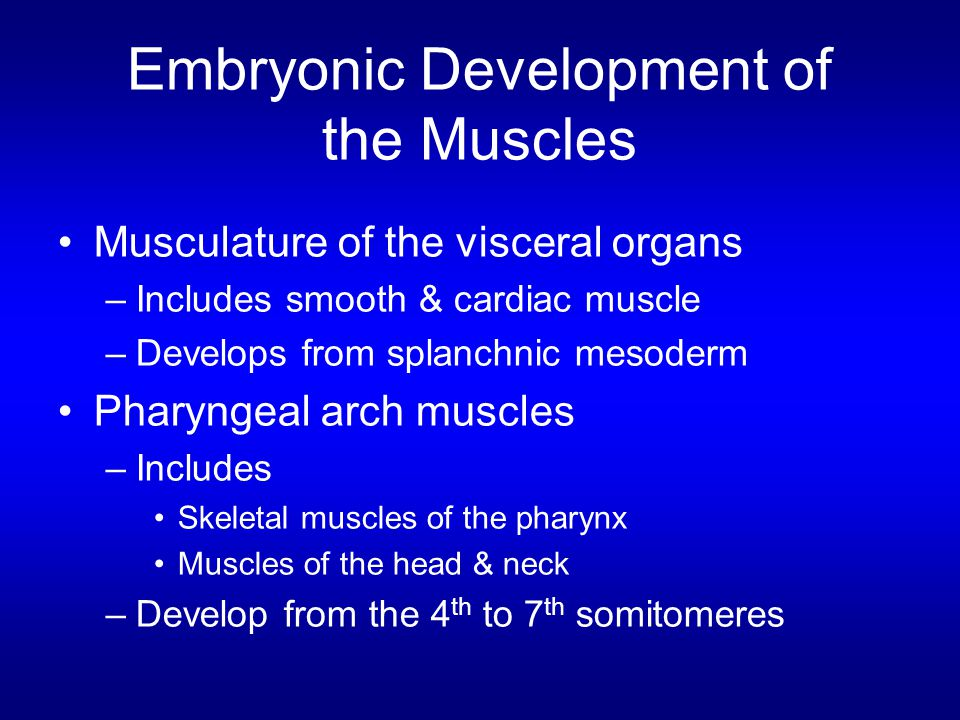 Musculature of the visceral organs –Includes smooth & cardiac muscle –Develops from splanchnic mesoderm Pharyngeal arch muscles –Includes Skeletal mus