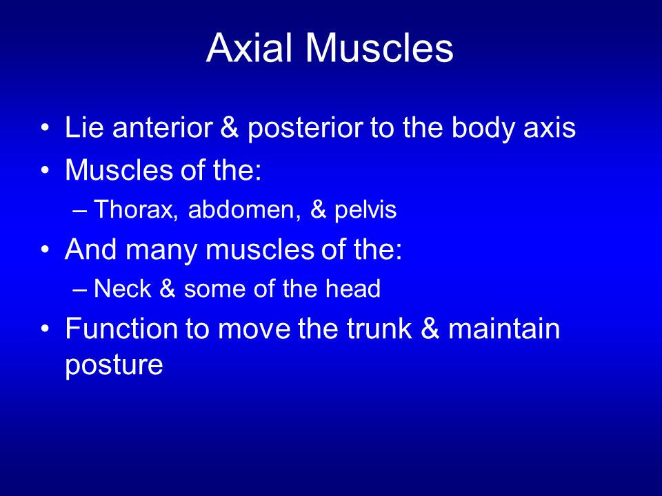 Axial Muscles Lie anterior & posterior to the body axis Muscles of the: –Thorax, abdomen, & pelvis And many muscles of the: –Neck & some of the head F
