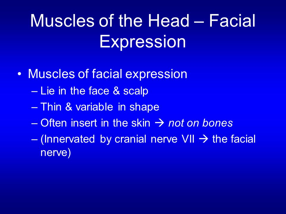 Muscles of the Head – Facial Expression Muscles of facial expression –Lie in the face & scalp –Thin & variable in shape –Often insert in the skin  no