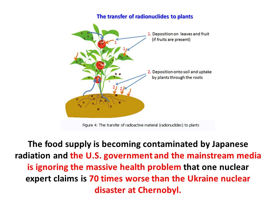 The food supply is becoming contaminated by Japanese radiation and the U.S.