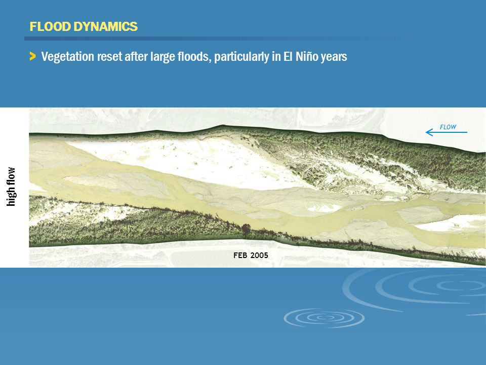 FEB 2005 high flow FLOOD DYNAMICS FLOW > Vegetation reset after large floods, particularly in El Niño years