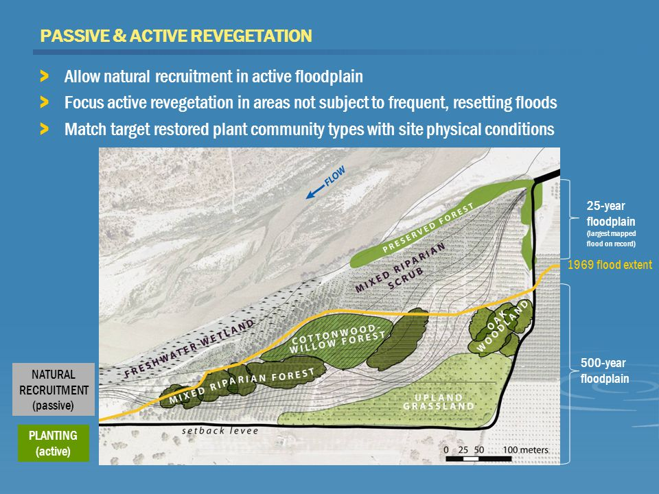 PASSIVE & ACTIVE REVEGETATION > Allow natural recruitment in active floodplain > Focus active revegetation in areas not subject to frequent, resetting floods > Match target restored plant community types with site physical conditions 1969 flood extent 500-year floodplain 25-year floodplain (largest mapped flood on record) PLANTING (active) NATURAL RECRUITMENT (passive)