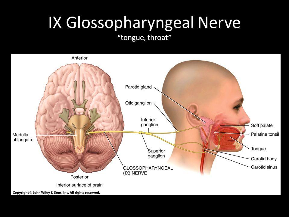 "IX Glossopharyngeal Nerve ""tongue, throat"""