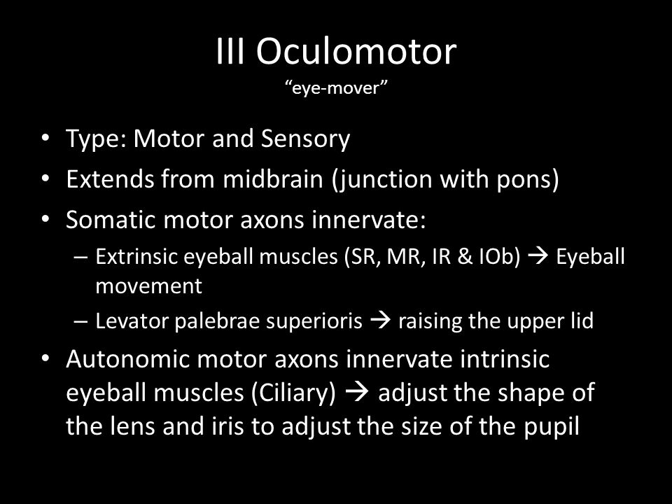 """III Oculomotor """"eye-mover"""" Type: Motor and Sensory Extends from midbrain (junction with pons) Somatic motor axons innervate: – Extrinsic eyeball muscl"""