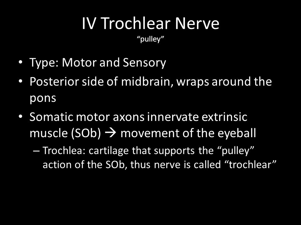 VI Abducens Nerves Away to lead Type: Motor and Sensory Originates in the pons Somatic motor axons innervate extrinsic muscle (LR)  lateral rotation of eyeball – ABDuction or lateral movement of eye = ABDucens nerve