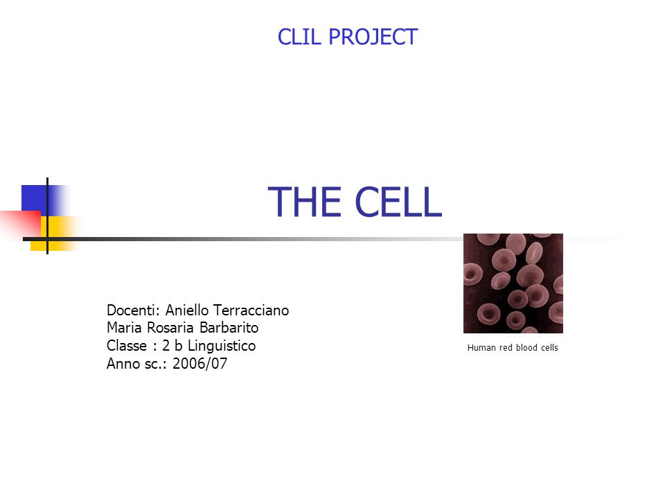 THE CELL Docenti: Aniello Terracciano Maria Rosaria Barbarito Classe : 2 b Linguistico Anno sc.: 2006/07 CLIL PROJECT Human red blood cells