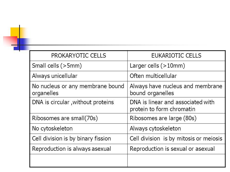 PROKARYOTIC CELLSEUKARIOTIC CELLS Small cells (>5mm)Larger cells (>10mm) Always unicellularOften multicellular No nucleus or any membrane bound organe
