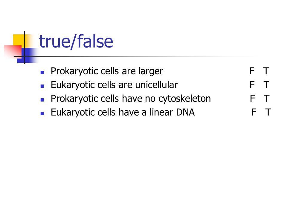 true/false Prokaryotic cells are larger F T Eukaryotic cells are unicellular F T Prokaryotic cells have no cytoskeleton F T Eukaryotic cells have a li