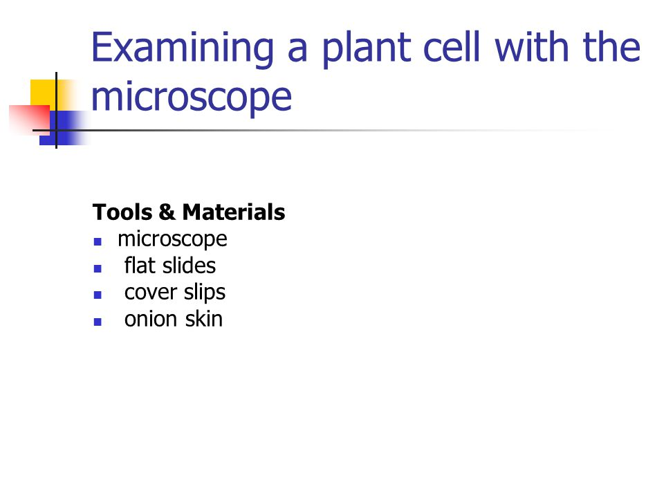 Examining a plant cell with the microscope Tools & Materials microscope flat slides cover slips onion skin
