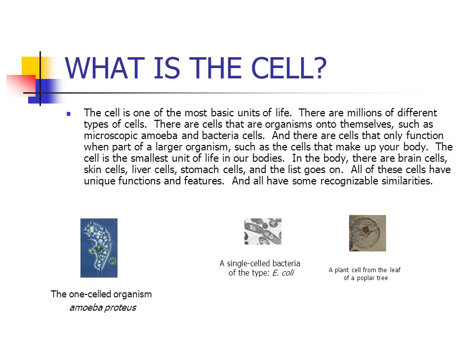 WHAT IS THE CELL? The cell is one of the most basic units of life. There are millions of different types of cells. There are cells that are organisms