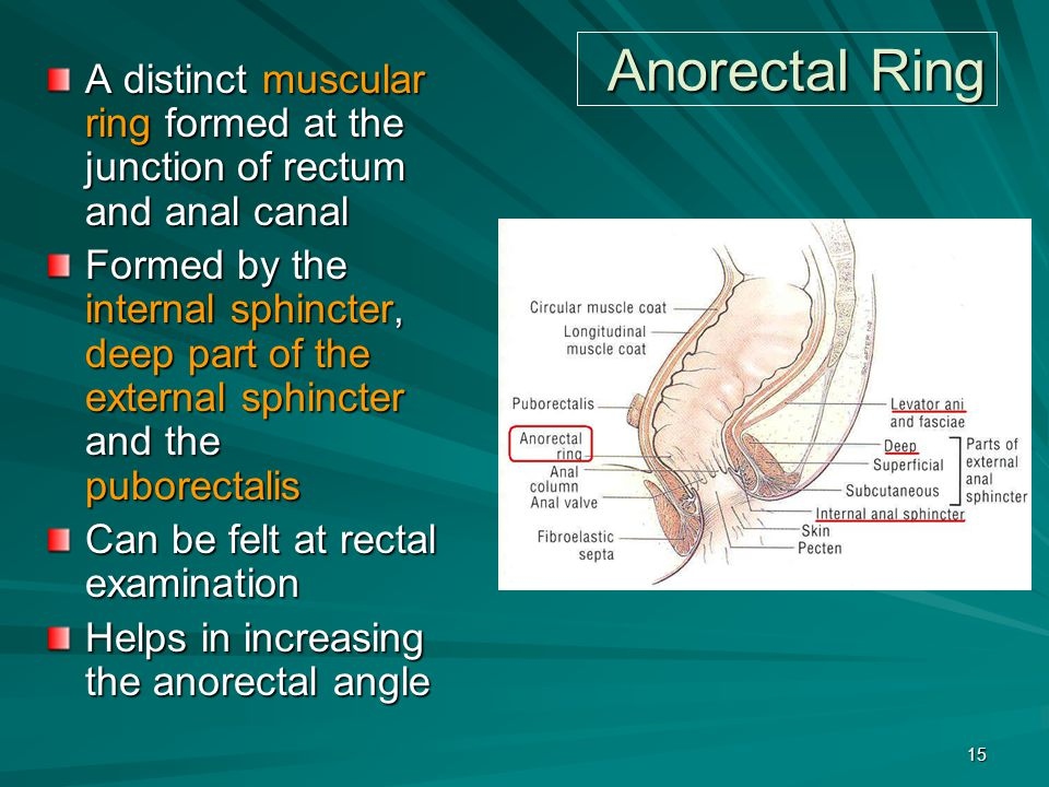 Anorectal Ring A distinct muscular ring formed at the junction of rectum and anal canal Formed by the internal sphincter, deep part of the external sp