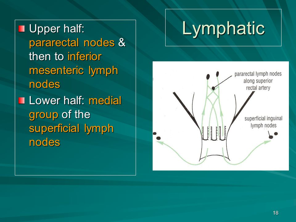 Lymphatic Upper half: pararectal nodes & then to inferior mesenteric lymph nodes Lower half: medial group of the superficial lymph nodes 18
