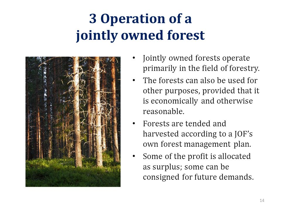 3 Operation of a jointly owned forest Jointly owned forests operate primarily in the field of forestry.