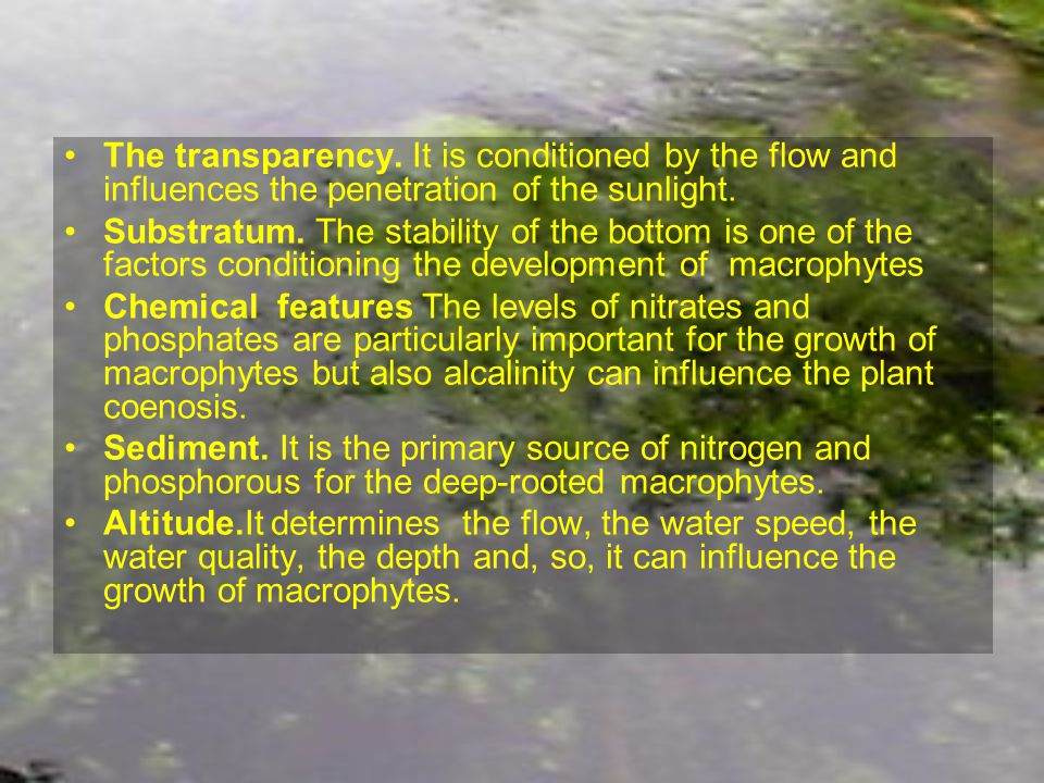 The transparency. It is conditioned by the flow and influences the penetration of the sunlight.