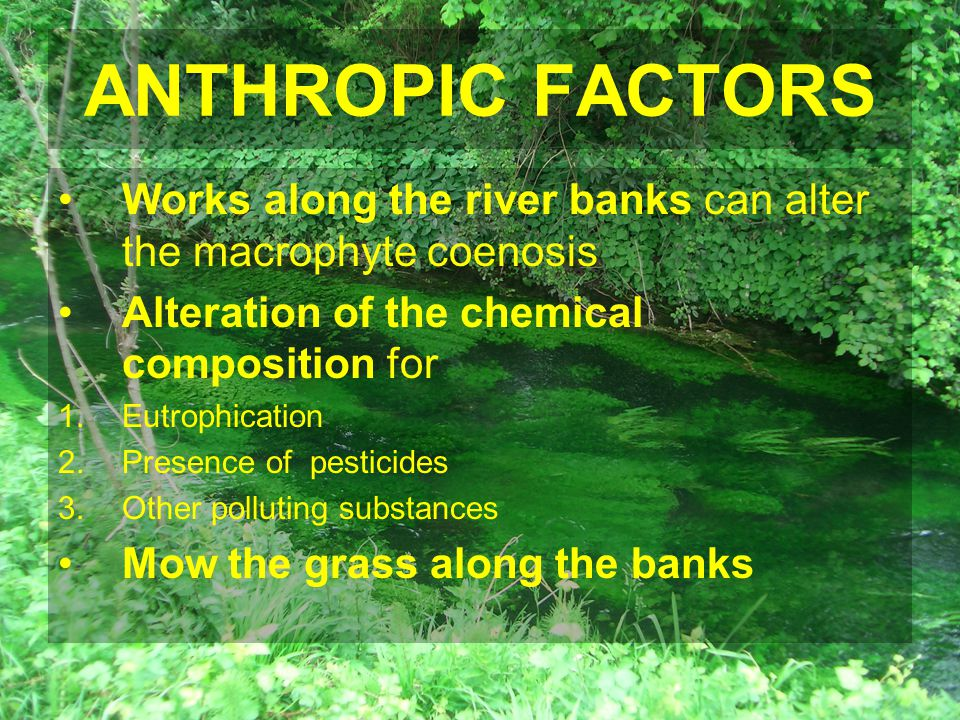 ANTHROPIC FACTORS Works along the river banks can alter the macrophyte coenosis Alteration of the chemical composition for 1.Eutrophication 2.Presence of pesticides 3.Other polluting substances Mow the grass along the banks